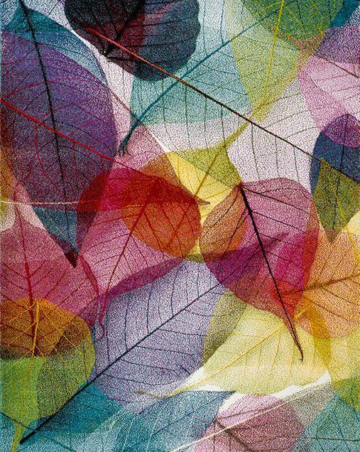 Alfombra con motivos Naturales y Florales Colors 22368 Multi