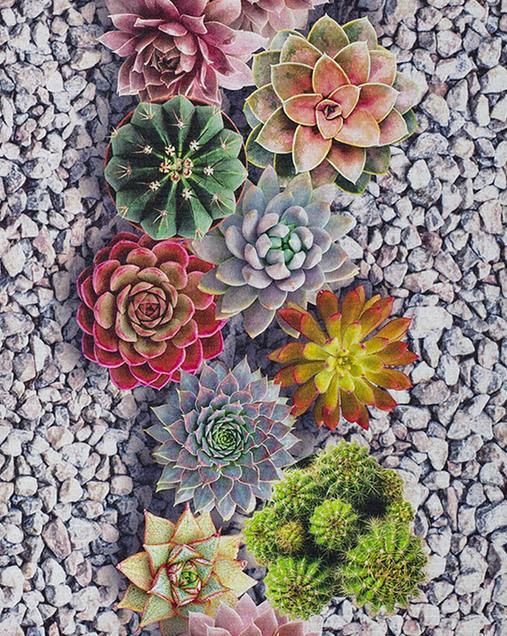 Alfombra con motivos Naturales y Florales Sprinty CACTUS